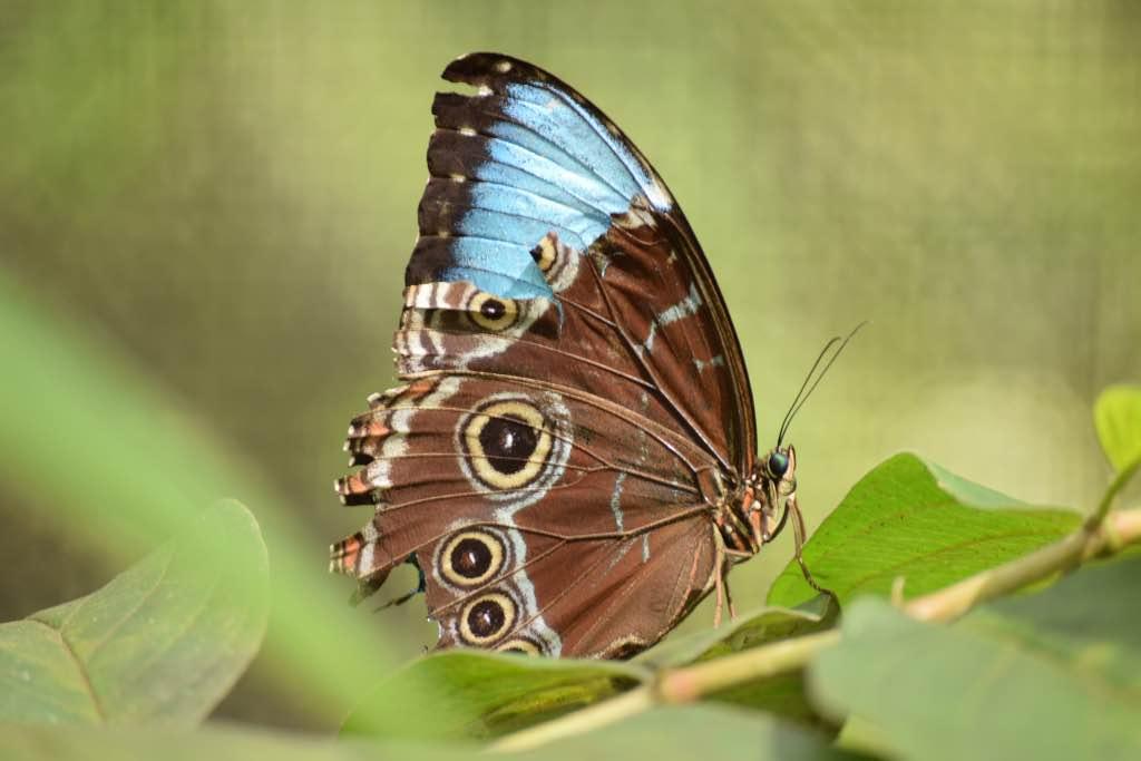 Foto Las mariposas de Occidente tienen el color de la esperanzal