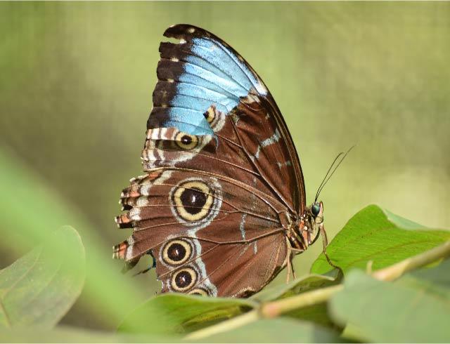 Imagen Crónica mariposas