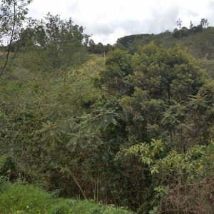 Reserva Natural de la Sociedad Civil Cochahuaira