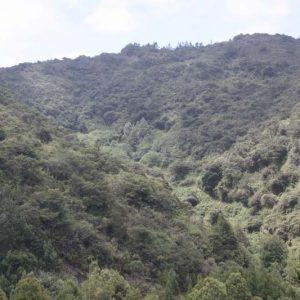 Reserva Forestal Protectora El Malmo