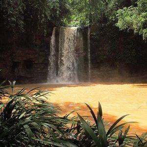 Reserva Natural de las Aves El Paujil