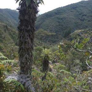 Parque Natural Municipal Rancheria