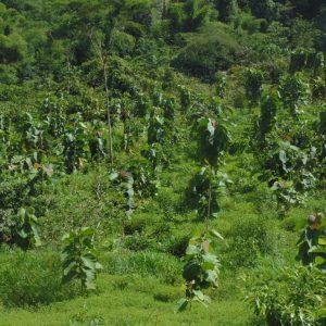 Boyacá se posiciona como uno de los departamentos con niveles más bajos de deforestación a nivel nacional