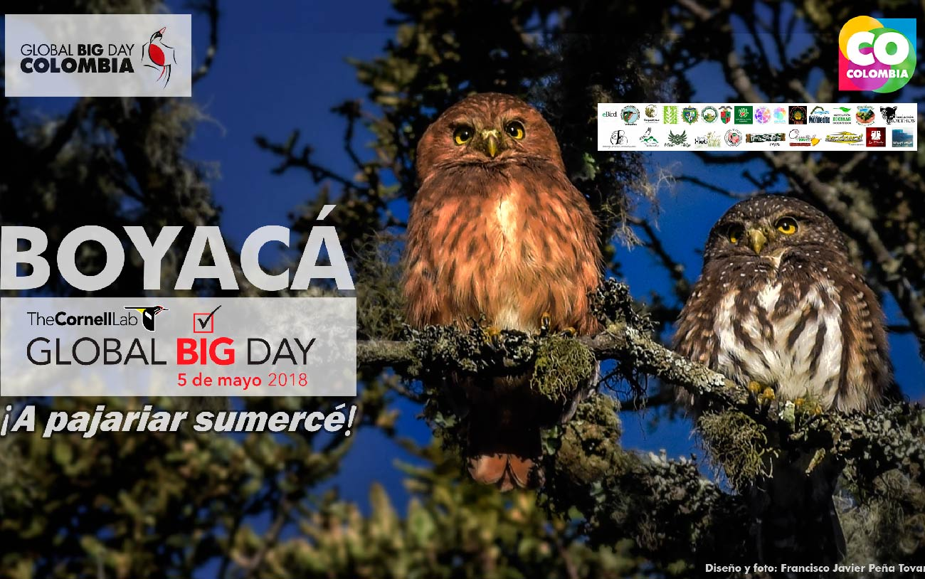 Corpoboyacá se une al Global Big Day Colombia – Corpoboyacá