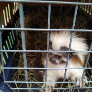 11 ejemplares de Fauna Silvestre regresarán a la libertad 2