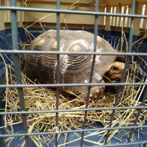 11 ejemplares de Fauna Silvestre regresarán a la libertad 1