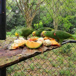 81 ejemplares de fauna silvestre regresaron a la libertad 7