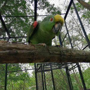 81 ejemplares de fauna silvestre regresaron a la libertad 6