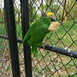81 ejemplares de fauna silvestre regresaron a la libertad 4