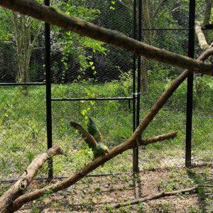 81 ejemplares de fauna silvestre regresaron a la libertad 3