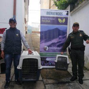 81 ejemplares de fauna silvestre regresaron a la libertad 2
