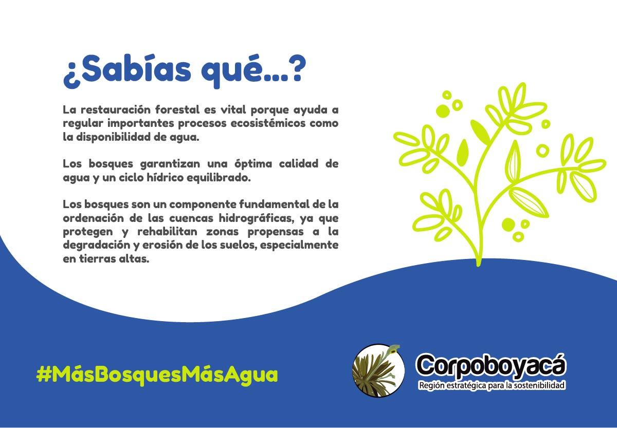 22 de marzo Día Mundial del Agua #MásBosquesMásAgua 4