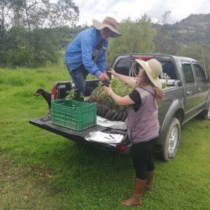 Entrega de material vegetal usuarios municipio de Belén