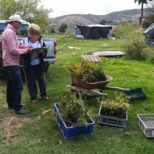 Entrega de material vegetal a usuarios vereda Lluviosos municipio de Cucaita
