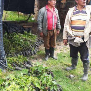 Entrega de material vegetal a usuarios vereda Escalones municipio de Cucaita