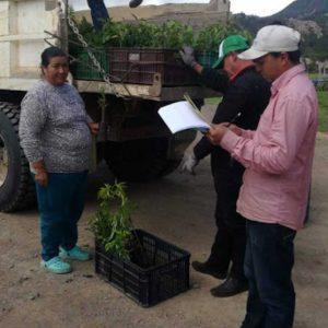 Entrega de material vegetal a usuarios vereda Llano municipio de Cucaita