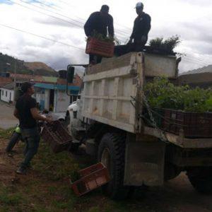 Entrega de material vegetal a usuarios vereda Pijaos municipio de Cucaita