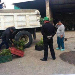 Entrega de material vegetal a usuarios vereda Chipacatá municipio de Cucaita