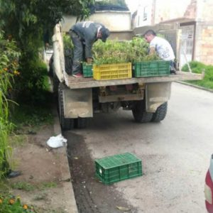 Entrega de material Vegetal a secretaria de Planeación municipio de Cucaita