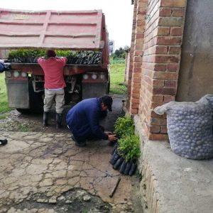 Entrega material vegetal vda Cormechoque municipio de Siachoque