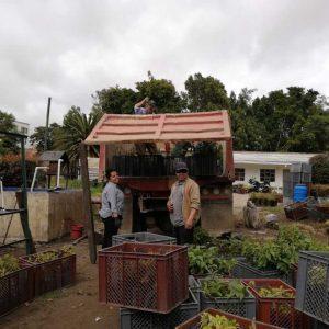 Entrega material vegetal secretaria de planeación municipio de Siachoque