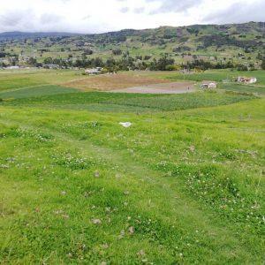 Entrega material vegetal vereda Siachoque municipio de Siachoque