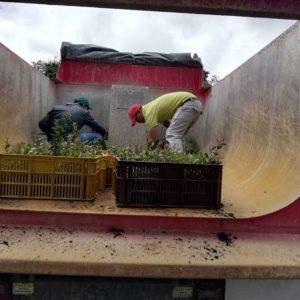 Entrega material vegetal a la Secretaria de Desarrollo Agropecuario municipio de Tibasosa