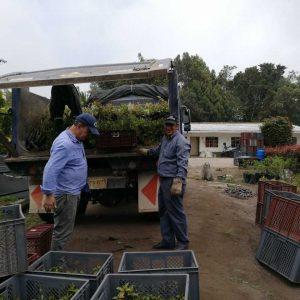 Entrega de material vegetal a usuarios vereda Cachavita municipio de Santa Rosa de Viterbo