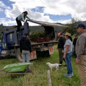 Entrega material vegetal vda cachavita municipio santa rosa de Viterbo