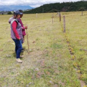 visita de seguimiento de siembra de material vegetal municipio de Paipa