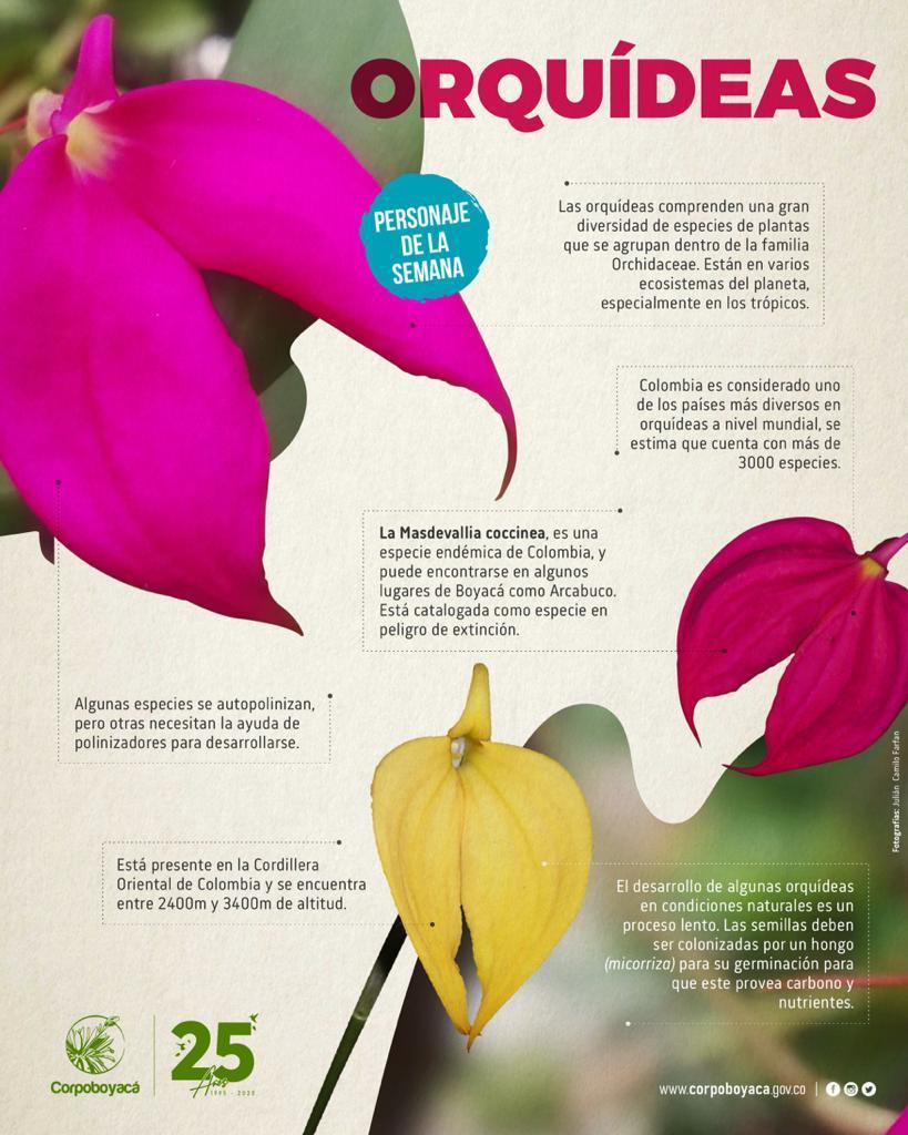 Foto Conoce más del personaje de la semana: Orquídeas