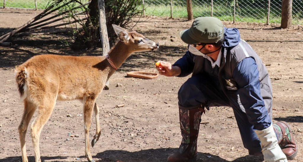 Foto Corpoboyacá realizó decomiso preventivo de cuatro especies de fauna silvestre en el municipio de Sáchica