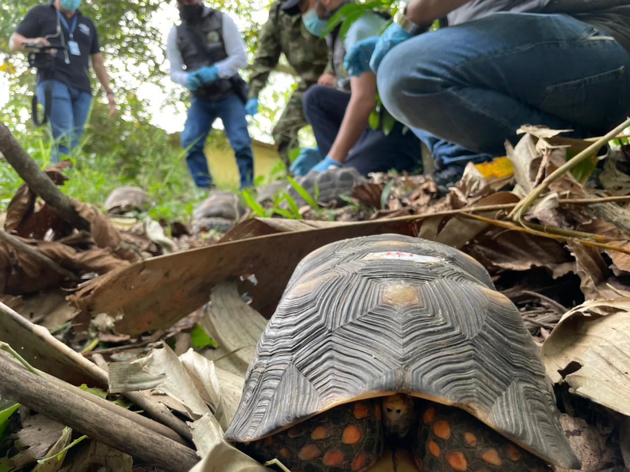 Foto Corpoboyacá libera fauna silvestre en Puerto Boyacá