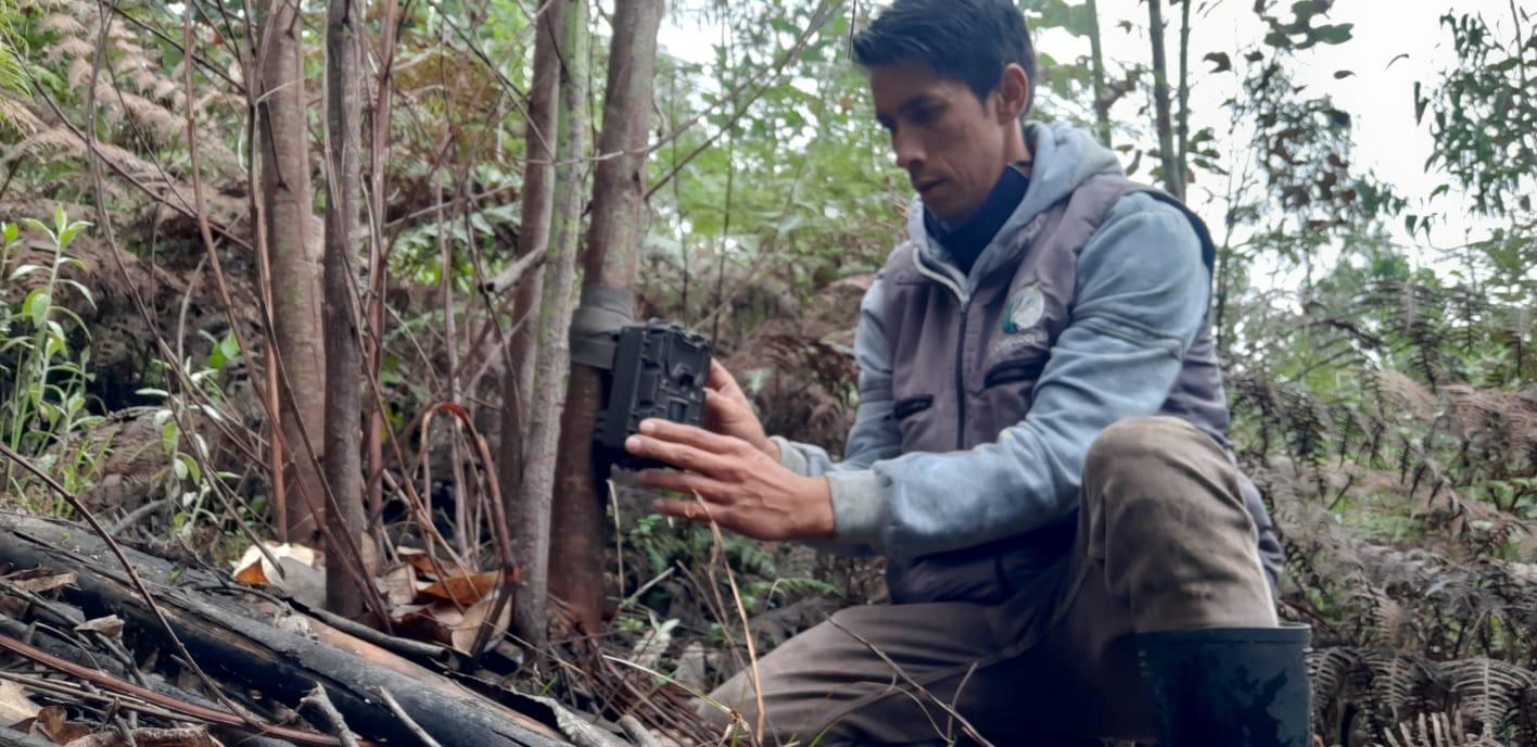 Foto Corpoboyacá instalará cámaras trampa para hacer monitoreo a osos andinos